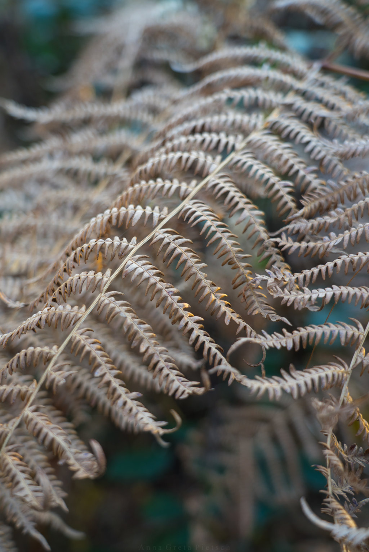 Farnblätter am Silbersee