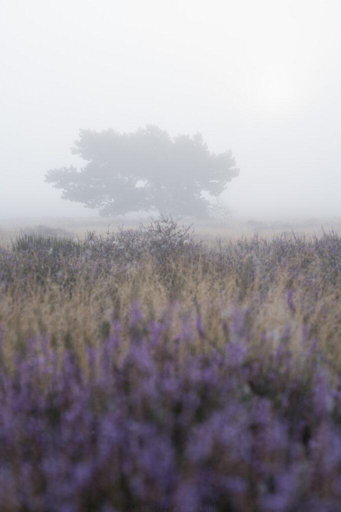 Nebel über Heidelandschaft, Haltern am See